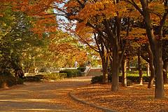 Gold_trees_67040136_7d752f5c5b_m