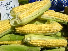 Corn_190924752_7976f2bc7f
